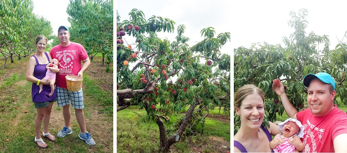 Peach Picking with the Family