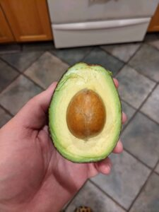 avocado food trends
